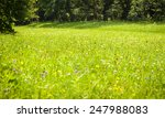 nature background.green meadow... | Shutterstock . vector #247988083