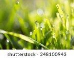 dew drops on green grass | Shutterstock . vector #248100943