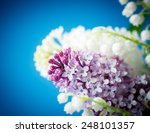 twig blossoming lilac on a blue ... | Shutterstock . vector #248101357
