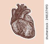 real human heart sketch  great... | Shutterstock .eps vector #248157493
