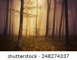 misty forest    Shutterstock . vector #248274337