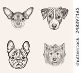 set sketch bulldog and terriers.... | Shutterstock .eps vector #248397163