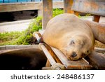 Sea Lion On A Bench In San...
