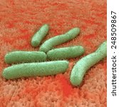 e. coli bacteria on tissue   an ... | Shutterstock . vector #248509867