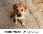 Cute Baby Dog With Sad Eyes In...