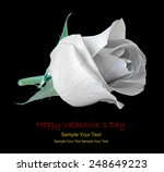 red rose isolated on white... | Shutterstock . vector #248649223