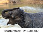 Elephants Take A Bath In Kwae...