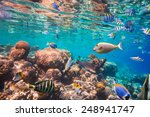 reef with a variety of hard and ... | Shutterstock . vector #248941747
