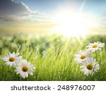 daisy field in the morning | Shutterstock . vector #248976007