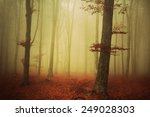 trees in foggy forest | Shutterstock . vector #249028303