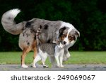 Stock photo dog and cat 249069067
