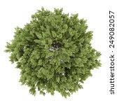 top view of hackberry tree...   Shutterstock . vector #249082057