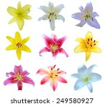 Collection Of Lily Flowers...