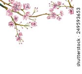 watercolor sakura frame.... | Shutterstock .eps vector #249593653
