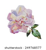 Watercolor Pale Pink Rose With...