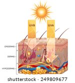 uvb and uva radiation penetrate ... | Shutterstock .eps vector #249809677