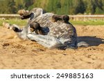 Horse Rolling On The Back .