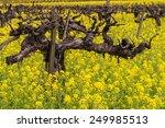 Napa Valley Vineyards  Mustard...