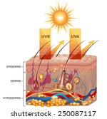 protected skin with sunscreen...   Shutterstock .eps vector #250087117