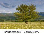 green summer meadow with...