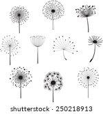 floral elements for you design... | Shutterstock .eps vector #250218913