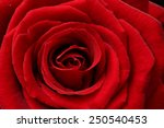 close up of red rose petals for ... | Shutterstock . vector #250540453