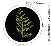 vector cypress sprig. cypress... | Shutterstock .eps vector #250606147