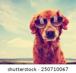 a cute golden retriever toned... | Shutterstock . vector #250710067