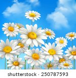 White Daisy Chamomile Flowers...
