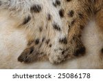 background of lynx fur.close up ... | Shutterstock . vector #25086178