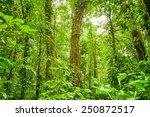 rein forest background  fresh...   Shutterstock . vector #250872517