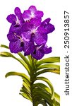 Small photo of Beautiful orchid vanda isolate on white background.