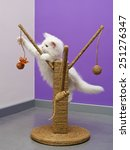 Stock photo white persian kitten playing on the scratching climber toy 251276347