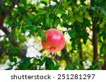 tree branch with ripe and red... | Shutterstock . vector #251281297