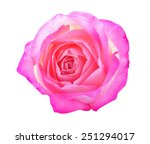 close up macro of a rose | Shutterstock . vector #251294017