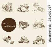 set of nuts collection. vector... | Shutterstock .eps vector #251401087