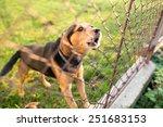 Cute Guard Dog Behind Fence ...