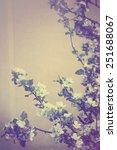 photo of blossoming tree brunch ... | Shutterstock . vector #251688067