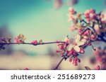 blossom tree over nature... | Shutterstock . vector #251689273