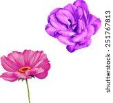 pink flower camellia  poppy... | Shutterstock .eps vector #251767813
