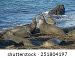 male elephant seals fighting at ... | Shutterstock . vector #251804197