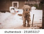 shaggy white chained old dog ... | Shutterstock . vector #251853217