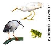 Illustration Of Night Heron...