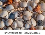 Shells Of Many Types And Sizes...