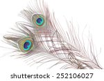two peacock feather on white