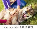 Siberian Husky Dog Funny...