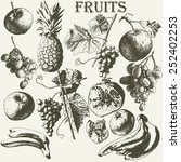 fruit set. hand drawn. | Shutterstock .eps vector #252402253