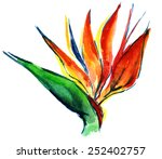 Watercolor Strelitzia Bird Of...