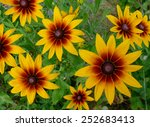 flower composition. gaillardia.