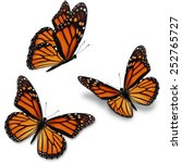 Three Monarch Butterfly ...